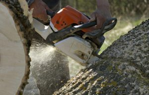 Tree Lopping Services Across North Shore
