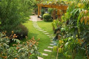 Gardening Services North Shore & Northern Beaches